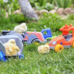 Best Chicken Toys