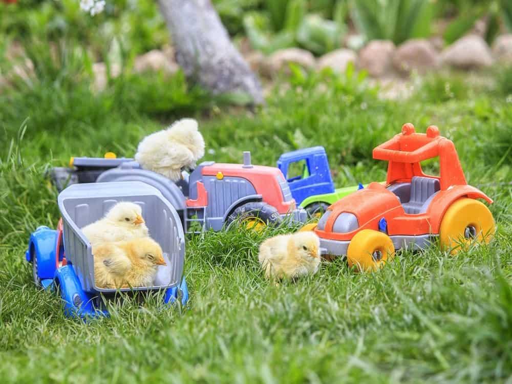 Best Chicken Toys