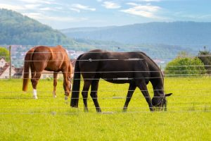 Best Electric Fence for Horses