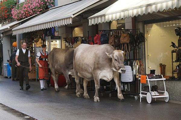 Best Cattle Prod